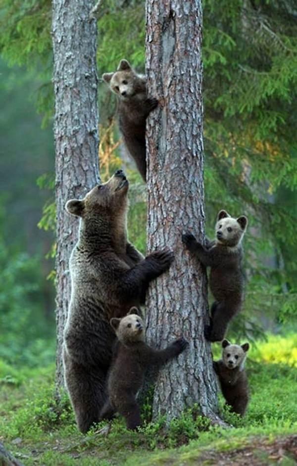Fotos de familias animales muy tiernas y bonitas 4