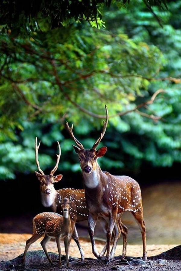 Fotos de familias animales muy tiernas y bonitas 6