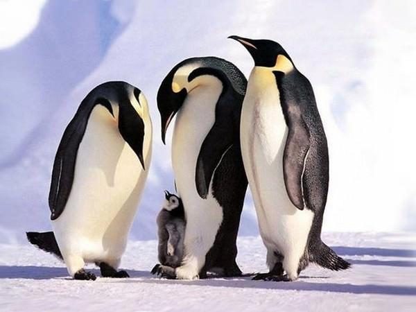 Fotos de familias animales muy tiernas y bonitas 7