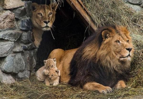 Fotos de familias animales muy tiernas y bonitas 8