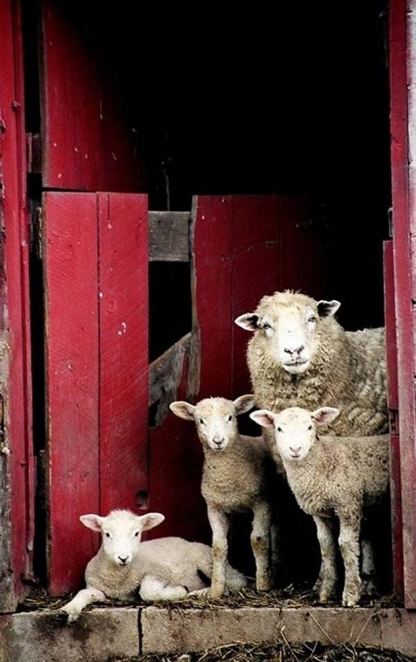 Fotos de familias animales muy tiernas y bonitas 9