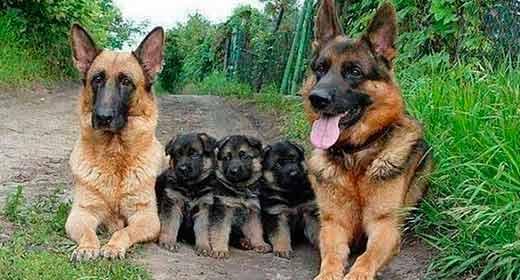 Fotos de familias animales muy tiernas y bonitas