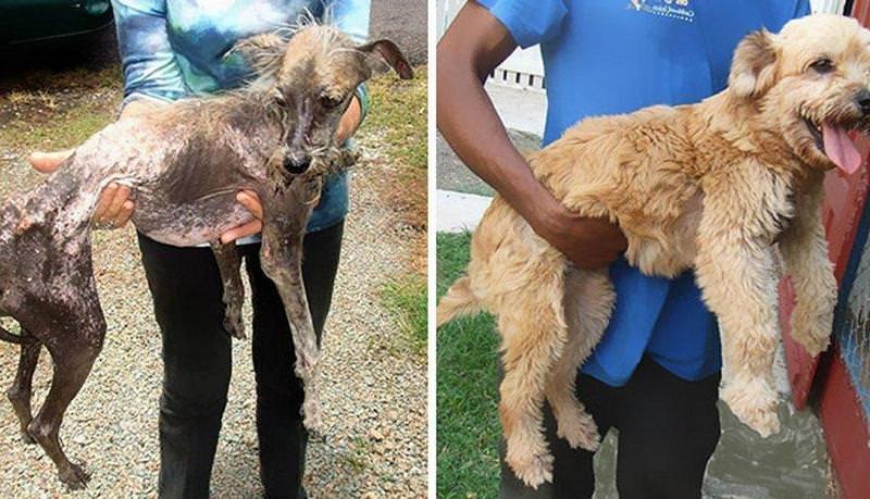 El antes y el después de perros abandonados y maltratados 1