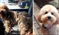 El antes y el después de perros abandonados y maltratados