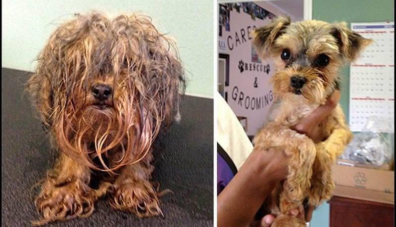 El antes y el después de perros abandonados y maltratados 4