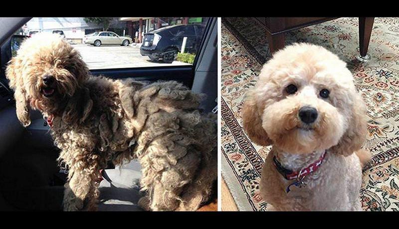 El antes y el después de perros abandonados y maltratados 5