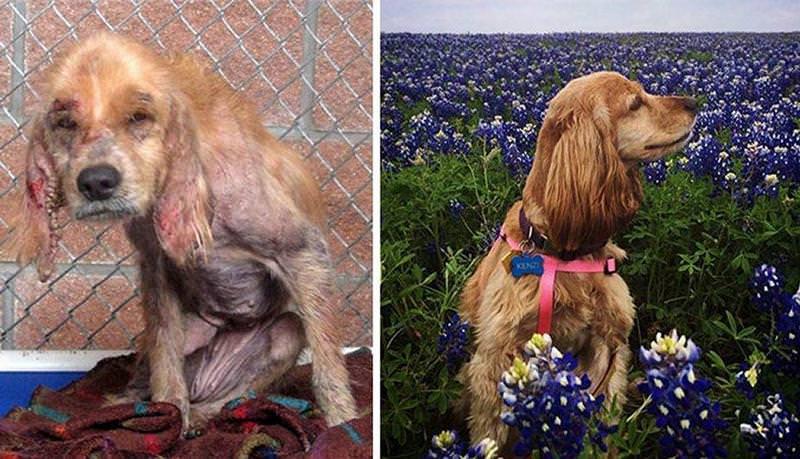 El antes y el después de perros abandonados y maltratados 6